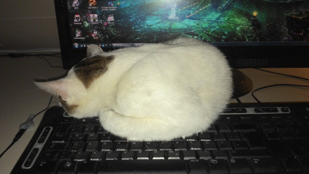 My Cat again :D