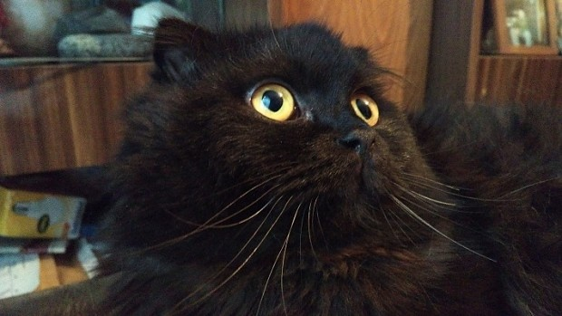 My cat Willy