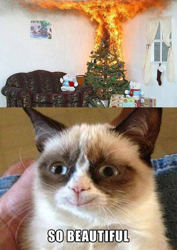 That's what grumpy cat wishes. =D =P XD