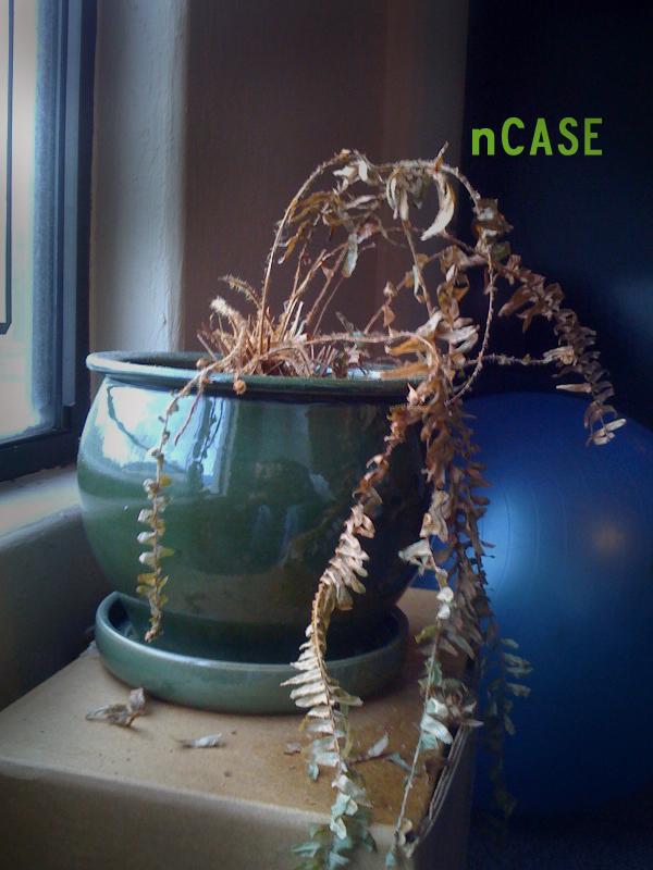 Casey Noland (nCase)