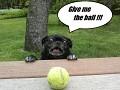 Give me the ball O.O
