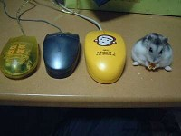 Mouse, mouse, mouse, MOUSE!
