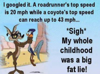 Is Hummingbird Faster Than The Road Runner?