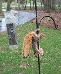 He wanted nuts, and went nuts.