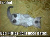 kitteh died