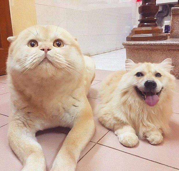 Doggos & Caddos