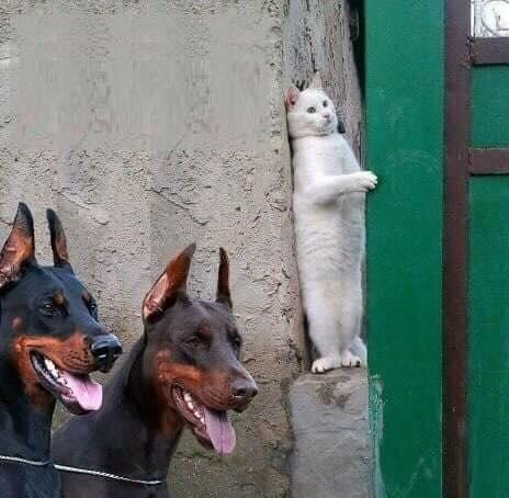 Cat Raiden