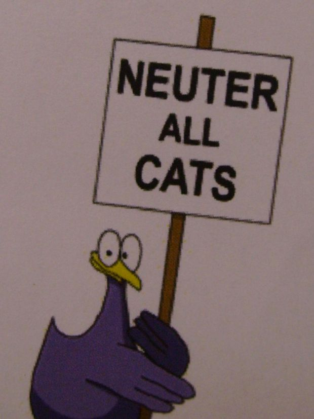 Neuter all cats