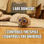Dune Cat!!