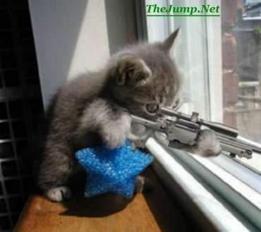 kucing sniper!!!!!