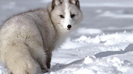 Wolves :3