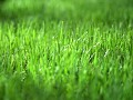 Green Grass Interactiv