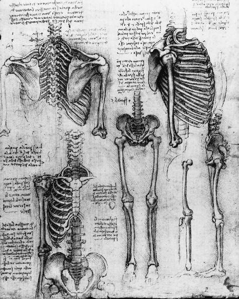 Leonardo's sketch