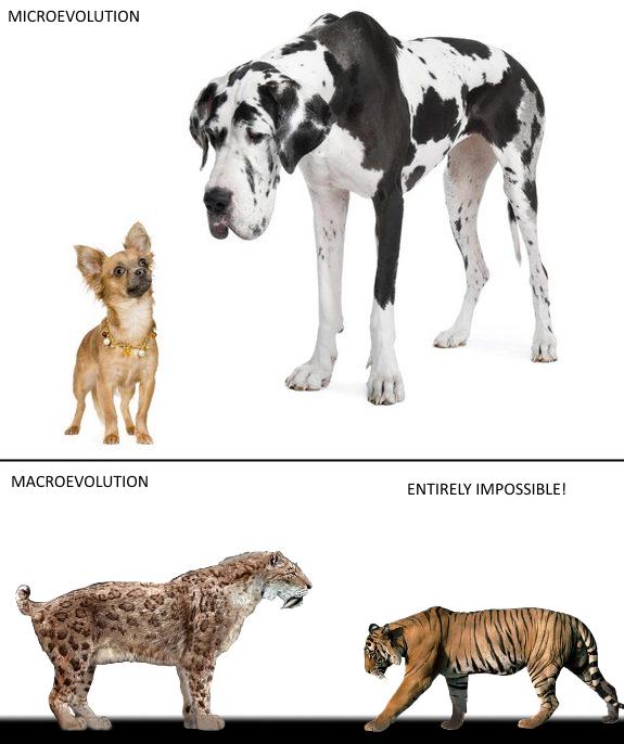 Micro x Macro evolution image - Atheists, Agnostics, and