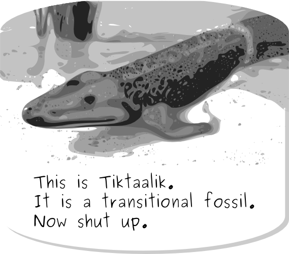 transitional fossil