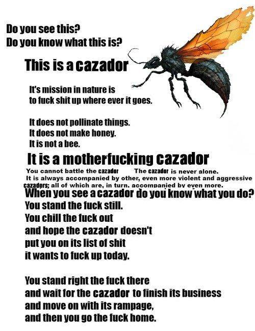 Introducing Cazador !