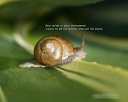 Meditation snail