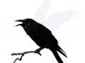 Blue Raven Games