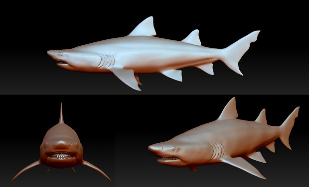 Sand tiger Shark Sculpt