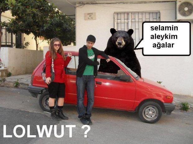 A True Bear