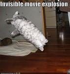 Stunt CAT