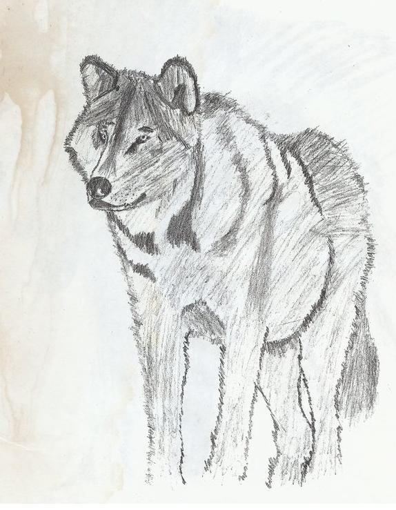 Concept Wolf