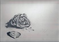 Dem Rose