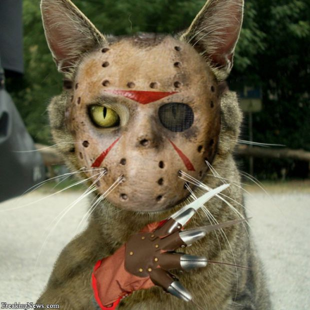 Jason&Frredy = Cat :P