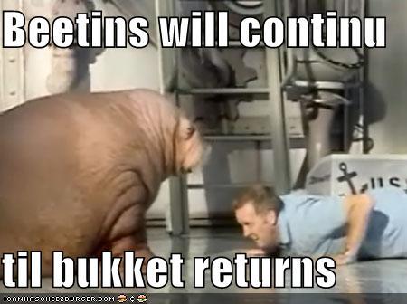 Walrus Beetins