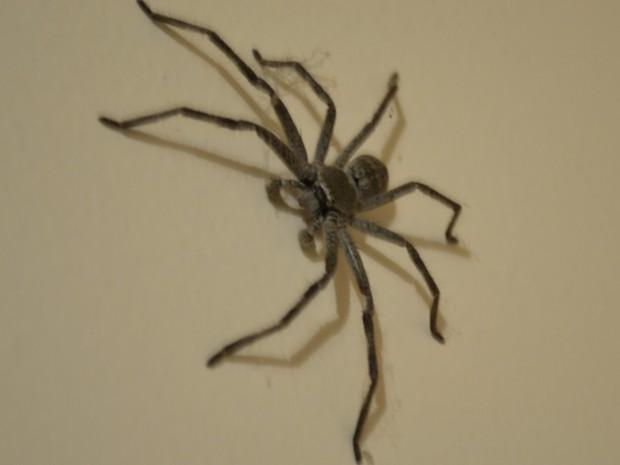 Stupid spider.