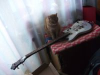 My cat and handmade bass ^___^