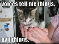 This is what my cat is thinking about...