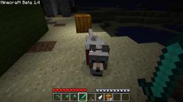 i found a wolf ^^