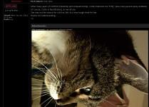 Kitty :(