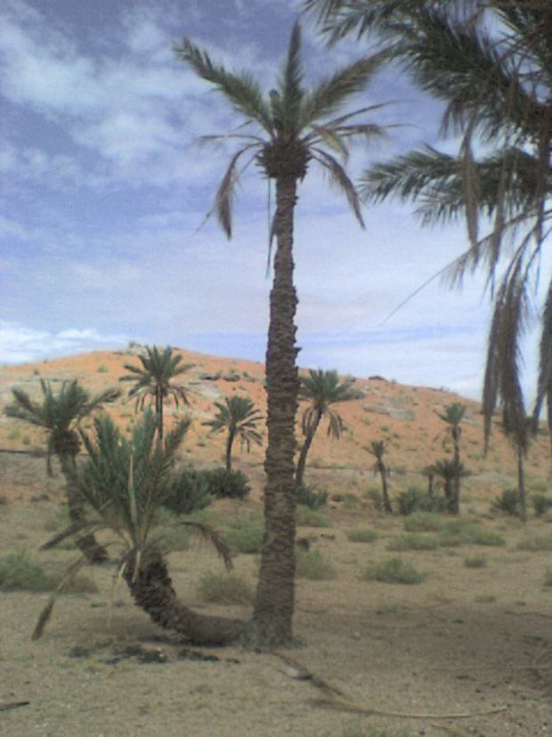 MY ADVENTURE IN OUR SHARA (BECHAR)