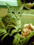Kitten Times