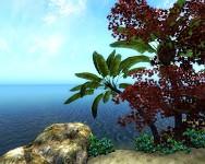 Sachsmoor Palmtrees