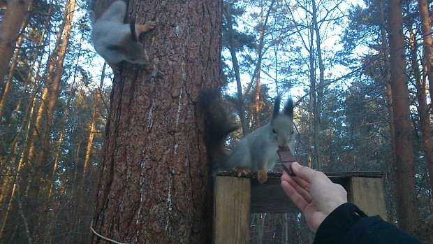 squirrels and chocolate