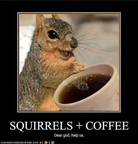 squirrels have discovered coffee