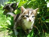 My cute kittens