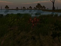 other part of the swamps2