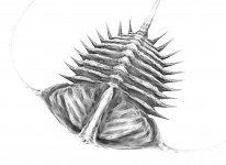 Trilobite Sculpt