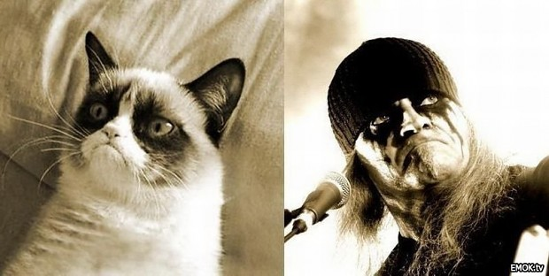 Grumpy Cat - Tom G. Warrior
