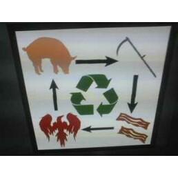 Pig Life Cycle