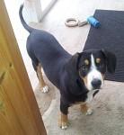 My doge...