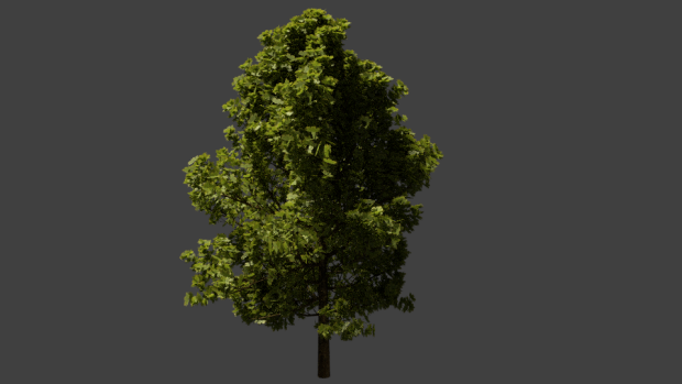Realistic Looking Tree Render