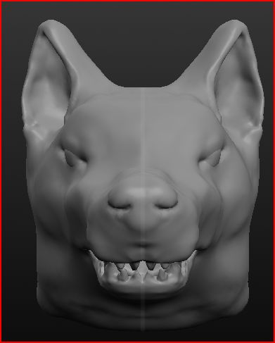 Sweddish Vallhund head1