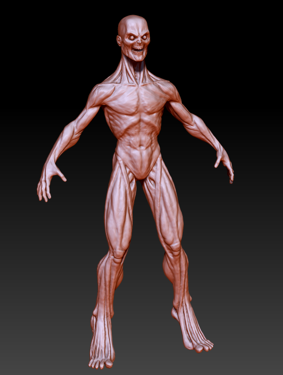 more anatomy stuff