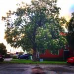 A tree in Sweden