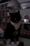 My Cat ^^